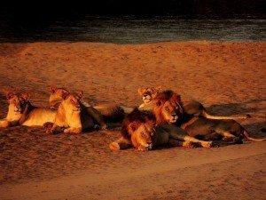 safari kenya tsavo est