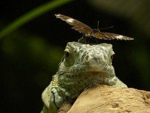 rettile farfalla