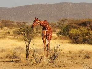 safari-kenya-samburu