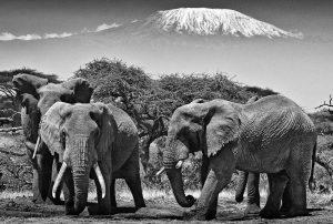safari-kenya-luxury-amboseli-kilimanjaro
