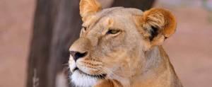 safari kenya offerte tsavo est