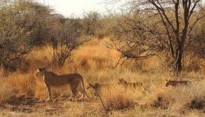 safari-luxury-kenya-samburu