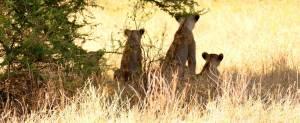 safari di gruppo tsavo est luglio