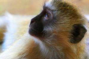 safari in kenya 4 giorni