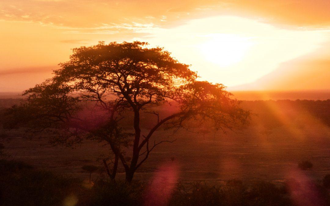 I sensi segreti delle piante africane – parte 2