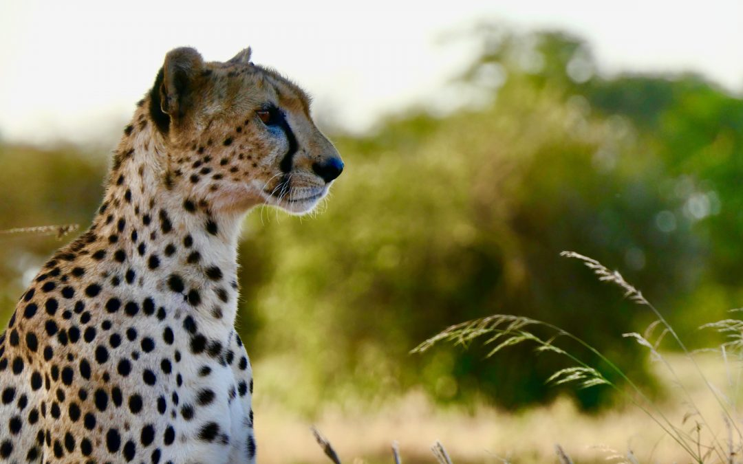 10 Great Successes in wildlife conservation