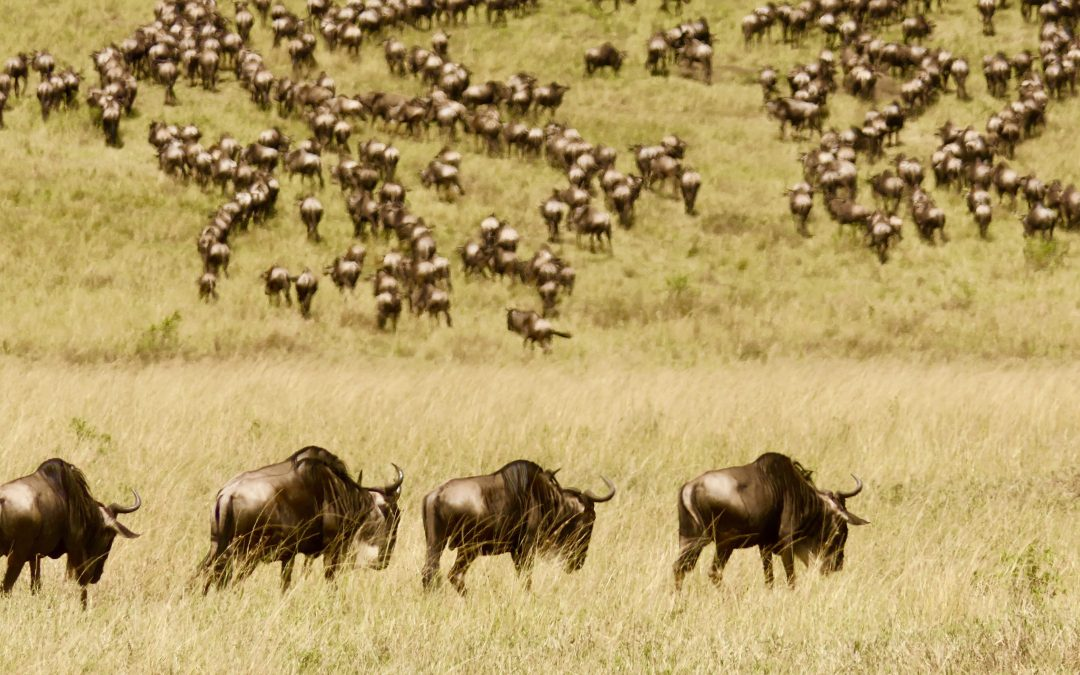 Why does Great Migration happen?