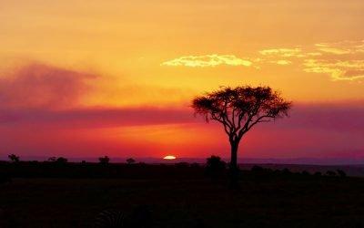 Sai perché gli alberi in savana hanno la chioma piatta?