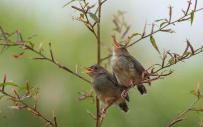 Perchè gli uccelli cantano al mattino